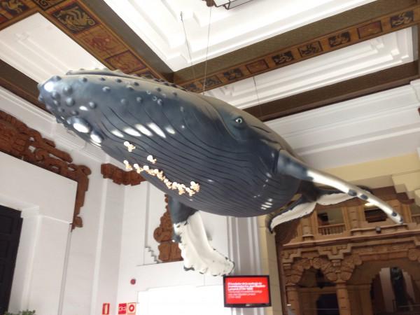 Marino, la impresionante Ballena que preside la entrada al Museo